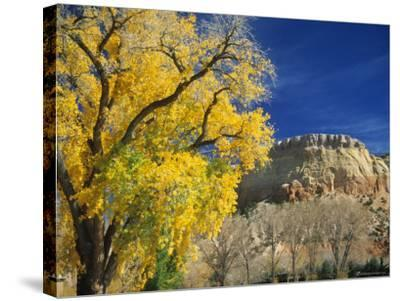 Cottonwood, Rio Arriba County, New Mexico, USA-Michael Snell-Stretched Canvas Print