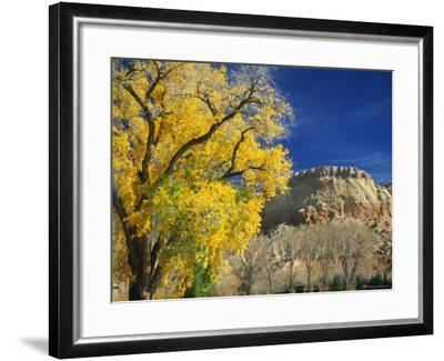 Cottonwood, Rio Arriba County, New Mexico, USA-Michael Snell-Framed Photographic Print