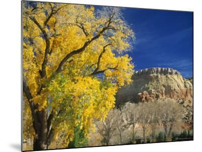 Cottonwood, Rio Arriba County, New Mexico, USA-Michael Snell-Mounted Photographic Print