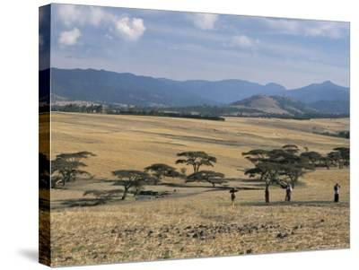 Acacia Trees on High Grasslands in Front of Bale Mountains, Southern Highlands, Ethiopia, Africa-Tony Waltham-Stretched Canvas Print