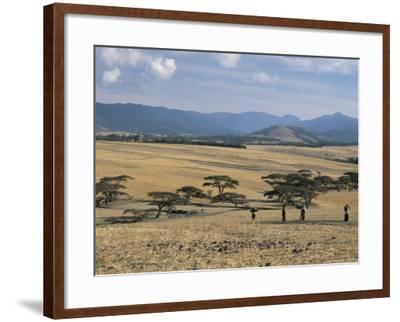 Acacia Trees on High Grasslands in Front of Bale Mountains, Southern Highlands, Ethiopia, Africa-Tony Waltham-Framed Photographic Print