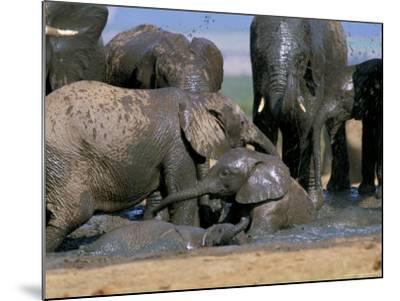 African Elephant (Loxodonta Africana) Mudbathing, Addo National Park, South Africa, Africa-Steve & Ann Toon-Mounted Photographic Print