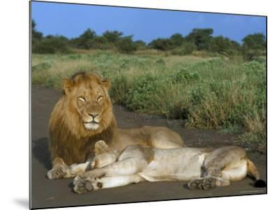 Lion and Lioness (Panthera Leo), Kruger National Park, South Africa, Africa-Steve & Ann Toon-Mounted Photographic Print