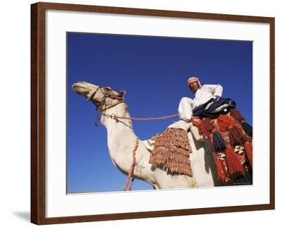 Bedouin Riding Camel, Sinai, Egypt, North Africa, Africa-Nico Tondini-Framed Photographic Print