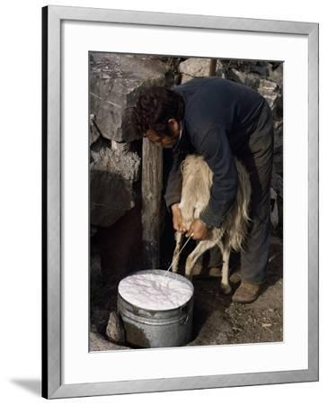 Shepherd Milking Sheep for Cheese, Island of Crete, Greece-Loraine Wilson-Framed Photographic Print