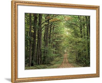 Chambord Forest, Loire, France-Adam Woolfitt-Framed Photographic Print