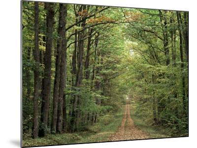 Chambord Forest, Loire, France-Adam Woolfitt-Mounted Photographic Print