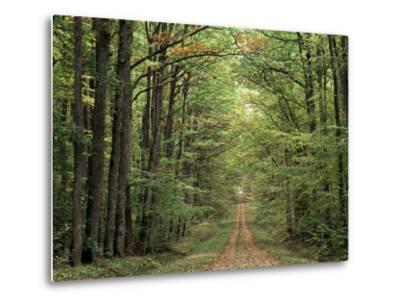 Chambord Forest, Loire, France-Adam Woolfitt-Metal Print