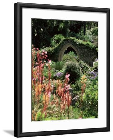 Abbey Gardens, Tresco, Isles of Scilly, United Kingdom-Adam Woolfitt-Framed Photographic Print