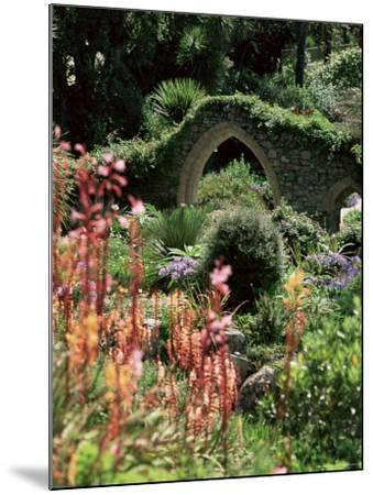 Abbey Gardens, Tresco, Isles of Scilly, United Kingdom-Adam Woolfitt-Mounted Photographic Print