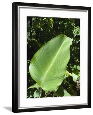 Leaf, Arenal Area, Costa Rica, Central America-R H Productions-Framed Photographic Print