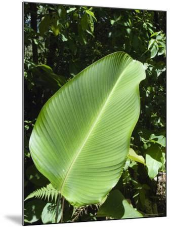 Leaf, Arenal Area, Costa Rica, Central America-R H Productions-Mounted Photographic Print