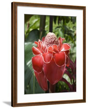 Tropical Flower, Costa Rica, Central America-R H Productions-Framed Photographic Print