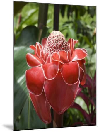 Tropical Flower, Costa Rica, Central America-R H Productions-Mounted Photographic Print