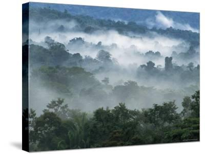 Rain Forest, from Lubaantun to Maya Mountains, Belize, Central America-Upperhall-Stretched Canvas Print
