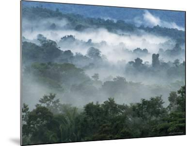 Rain Forest, from Lubaantun to Maya Mountains, Belize, Central America-Upperhall-Mounted Photographic Print