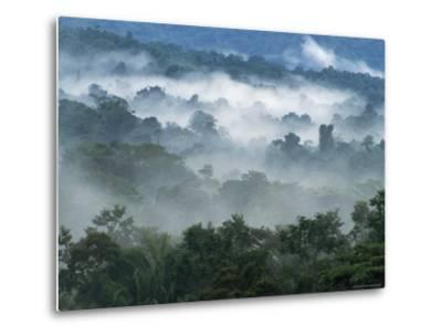 Rain Forest, from Lubaantun to Maya Mountains, Belize, Central America-Upperhall-Metal Print