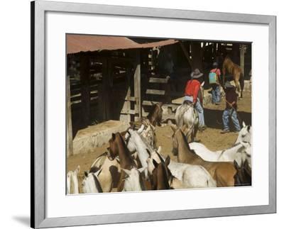 Horses, Hacienda Guachipelin, Near Rincon De La Vieja National Park, Guanacaste, Costa Rica-R H Productions-Framed Photographic Print