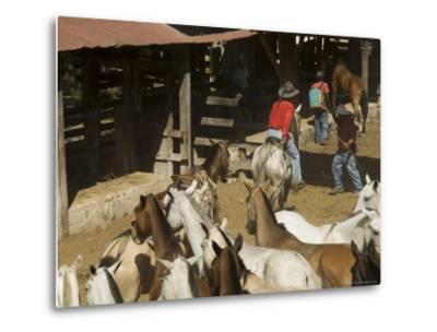 Horses, Hacienda Guachipelin, Near Rincon De La Vieja National Park, Guanacaste, Costa Rica-R H Productions-Metal Print