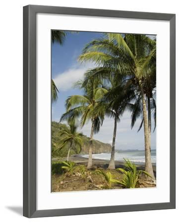 Palm Trees on Beach at Punta Islita, Nicoya Pennisula, Pacific Coast, Costa Rica, Central America-R H Productions-Framed Photographic Print
