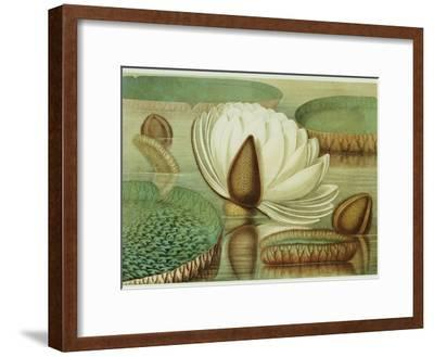 Victoria Regia or the Great Water Lily of America (Opening Flower), 1854, Publishers-Mary Cassatt-Framed Giclee Print