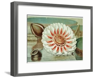 Victoria Regia or the Great Water Lily of America (Complete Bloom), 1854-Mary Cassatt-Framed Giclee Print