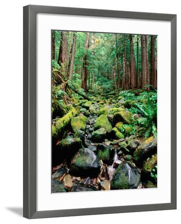 Rainforest in Sol Duc Rain Forest, Olympic National Park, Washington-John Elk III-Framed Photographic Print