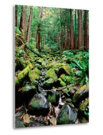 Rainforest in Sol Duc Rain Forest, Olympic National Park, Washington-John Elk III-Metal Print