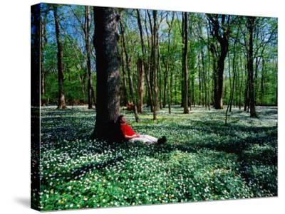 Man Resting Against Tree amidst Anemones in Spring, Dalby Soderskog National Park, Skane, Sweden-Anders Blomqvist-Stretched Canvas Print