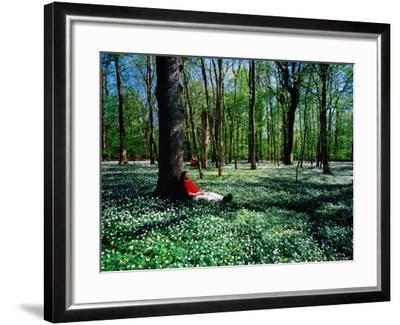 Man Resting Against Tree amidst Anemones in Spring, Dalby Soderskog National Park, Skane, Sweden-Anders Blomqvist-Framed Premium Photographic Print