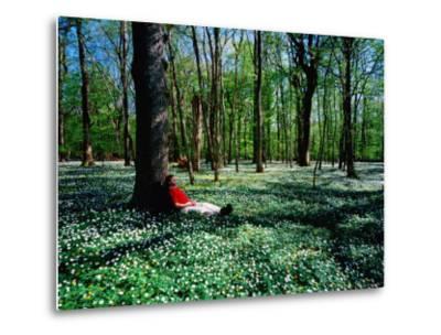 Man Resting Against Tree amidst Anemones in Spring, Dalby Soderskog National Park, Skane, Sweden-Anders Blomqvist-Metal Print