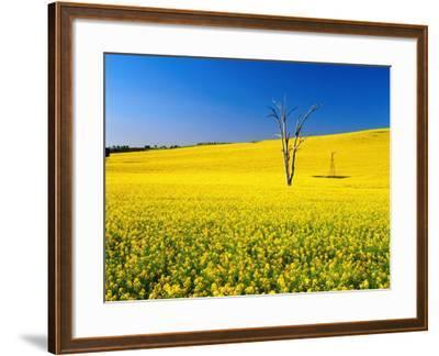Dead Tree in Field of Flowering Canola, Cootamundra, New South Wales, Australia-Ross Barnett-Framed Photographic Print