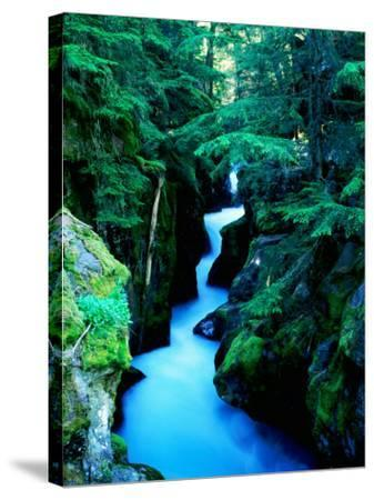 Water Rushing through Avalanche Creek Gorge, Glacier National Park, Montana-Holger Leue-Stretched Canvas Print