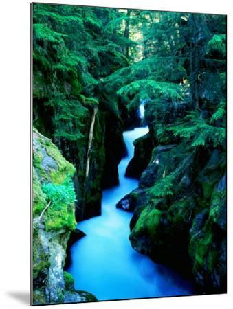 Water Rushing through Avalanche Creek Gorge, Glacier National Park, Montana-Holger Leue-Mounted Photographic Print