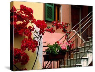 Flowers and Painted Houses in Town in Cinque Terre, Manarola, Liguria, Italy-Diana Mayfield-Stretched Canvas Print