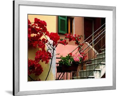 Flowers and Painted Houses in Town in Cinque Terre, Manarola, Liguria, Italy-Diana Mayfield-Framed Photographic Print