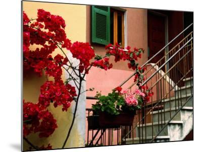 Flowers and Painted Houses in Town in Cinque Terre, Manarola, Liguria, Italy-Diana Mayfield-Mounted Photographic Print