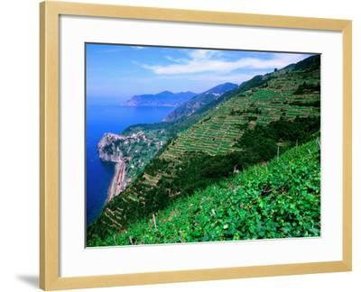 Vineyards from Trail Above Corniglia, Cinque Terre, Liguria, Italy-John Elk III-Framed Photographic Print