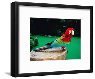 Colourful Parrot at Jurong Bird Park, Singapore-John Elk III-Framed Photographic Print