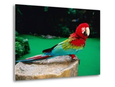 Colourful Parrot at Jurong Bird Park, Singapore-John Elk III-Metal Print