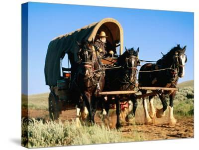 Mormon Man Driving Horse Carriage, Mormon Pioneer Wagon Train to Utah, Near South Pass, Wyoming-Holger Leue-Stretched Canvas Print