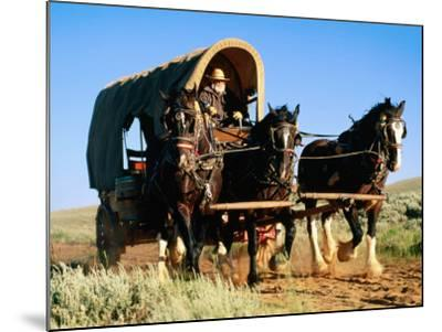 Mormon Man Driving Horse Carriage, Mormon Pioneer Wagon Train to Utah, Near South Pass, Wyoming-Holger Leue-Mounted Photographic Print