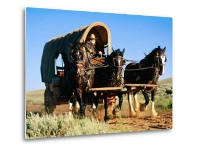 Mormon Man Driving Horse Carriage, Mormon Pioneer Wagon Train to Utah, Near South Pass, Wyoming-Holger Leue-Metal Print