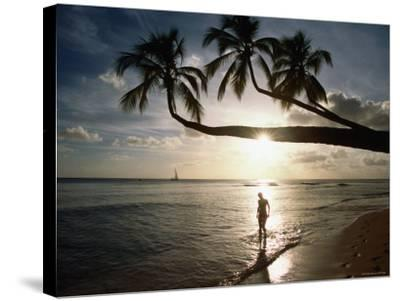 Sunset Silhouette on Turtle Beach, Mullins Bay, St Peter-Holger Leue-Stretched Canvas Print