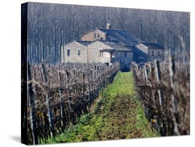 Winery Vines and Buildng, Torgiano, Umbria, Italy-Oliver Strewe-Stretched Canvas Print