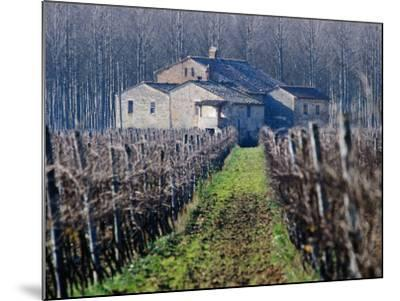 Winery Vines and Buildng, Torgiano, Umbria, Italy-Oliver Strewe-Mounted Photographic Print