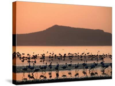 Flamingos Silhouetted in Lake Abiata, Abiyata-Shala National Park, Oromia, Ethiopia-Ariadne Van Zandbergen-Stretched Canvas Print