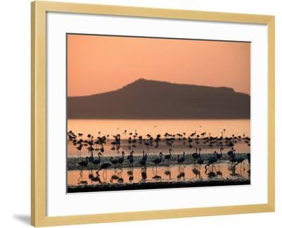 Flamingos Silhouetted in Lake Abiata, Abiyata-Shala National Park, Oromia, Ethiopia-Ariadne Van Zandbergen-Framed Photographic Print