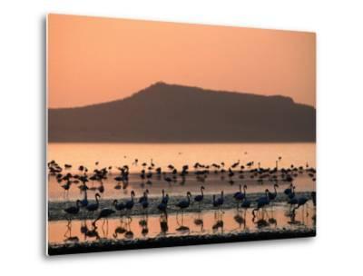 Flamingos Silhouetted in Lake Abiata, Abiyata-Shala National Park, Oromia, Ethiopia-Ariadne Van Zandbergen-Metal Print