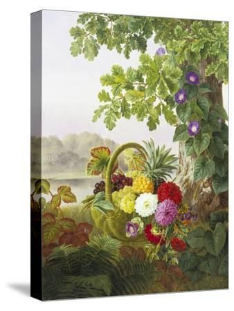 Dahlias, Asters and Morning Glory-Johan Laurentz Jensen-Stretched Canvas Print